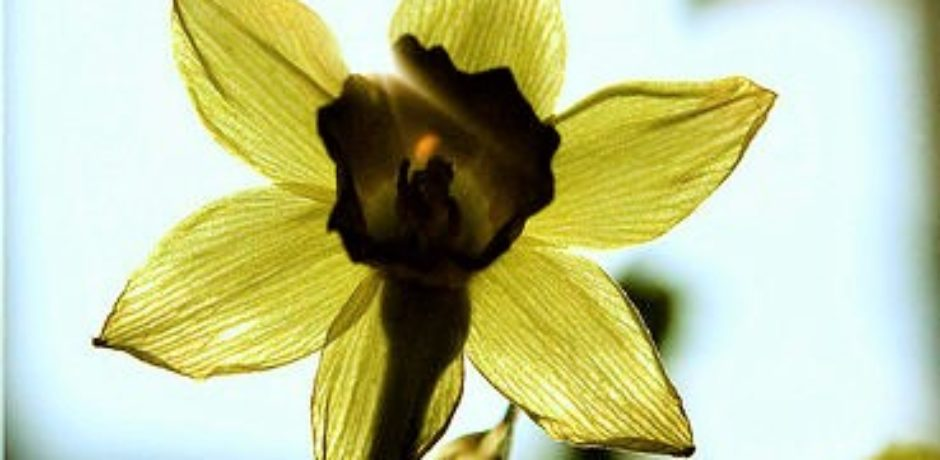 Blüte - Anleitung zur Selbsthypnose
