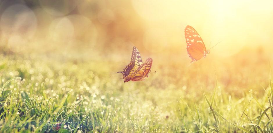 Schmetterlinge als Sinnbild für die Hypnose