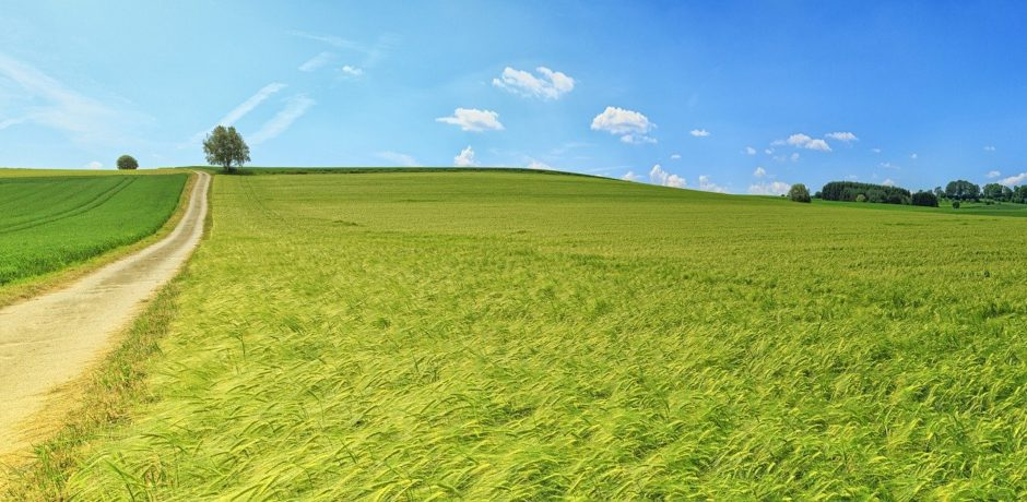 Panorama Sommer Wiese